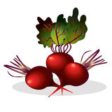 Beet  illustration. Royalty Free Stock Image