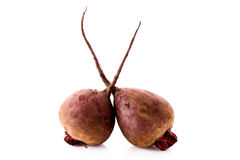 Beet isolated Royalty Free Stock Image