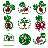 Beet labels and elements set. Vector. Illustration Stock Images