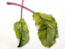 Beet leaves. Two fresh beet leaves against white background Royalty Free Stock Photo