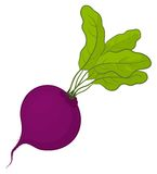 Beet with leaves Royalty Free Stock Photo