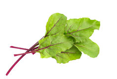 Beet leaves. Beetroot leaves, fresh beet leaf. Stock Image