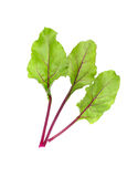 Beet leaves. Beetroot leaves, fresh beet leaf. Stock Photos