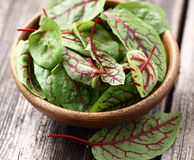 Beet leaves in a wooden plate Royalty Free Stock Photos