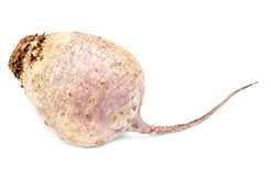 Beet purple vegetable on white Stock Images
