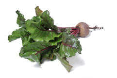 Beet root Stock Photo