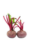 Beet root. Fresh beet root good for healthy diet Royalty Free Stock Photos