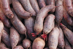 Beet root Royalty Free Stock Images