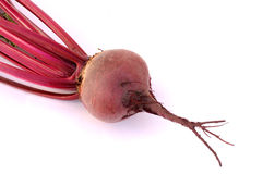Beet root Royalty Free Stock Photo