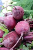 Beet root Royalty Free Stock Photography