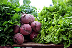 Beet root and lettuce Royalty Free Stock Image