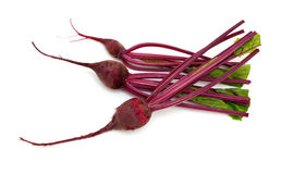 Beet root Royalty Free Stock Image