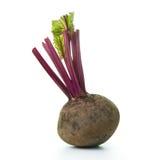 Beet root Stock Photos
