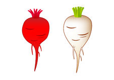 Beet-root  and sugar-beet. On a white background Royalty Free Stock Image