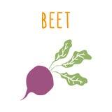 Beet root  on white Stock Photo
