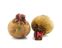 Beet roots Royalty Free Stock Image