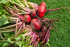Beet roots Stock Photos