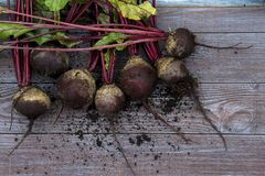 Beet roots. Fresh beet roots on the wooden background recently-dug-up stock photos