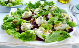 Beet Salad with goat cheese, walnuts, greens and herbs Royalty Free Stock Image