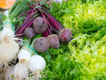 Beet, scallion and endive Royalty Free Stock Image