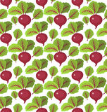 Beet seamless pattern. Beetroot endless background, texture. Vegetable backdrop. Vector illustration. Stock Photography