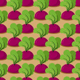Beet seamless pattern. Plantation beets Royalty Free Stock Photography