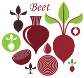Beet Royalty Free Stock Photography