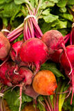 Beet Variety Stock Image