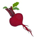 Beet vector. Beet isolated in. This is file of EPS10 format Royalty Free Stock Images