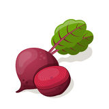 Beet  on white. Stock Photography