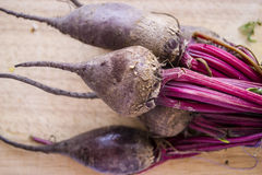 Beet on a wooden board. Vegetable. Beet on a wooden board Royalty Free Stock Photography
