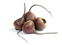 BeetBeet on a white Stock Images