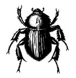 Beetle. Illustration of a black beetle stock illustration