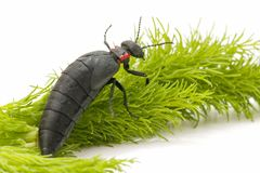 And beetle Royalty Free Stock Images