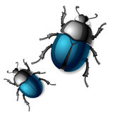 Beetle. Vector illustration of a beetle Royalty Free Stock Images