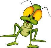 Beetle 24 long-legged Royalty Free Stock Images