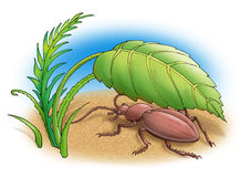 Beetle. The brown bug sits under a leaf Stock Photography