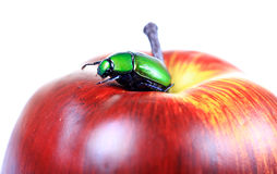 Beetle on apple Royalty Free Stock Images