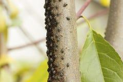 Beetle on the bark Stock Photos