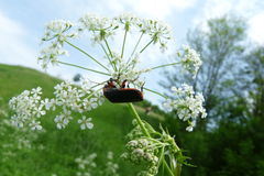 Beetle. Basking in the spring sunshine Stock Photography