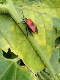 Beetle Stock Photos