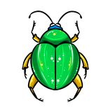 Beetle big green Royalty Free Stock Photo