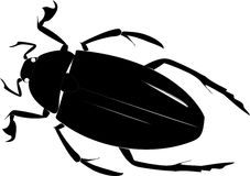 Beetle Stock Photo