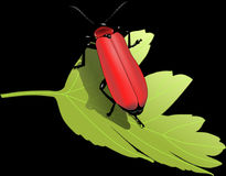 Beetle, Bug Insect, Leaf, Nature Royalty Free Stock Photo