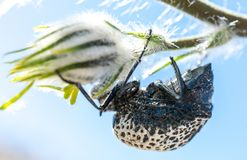 Beetle climing on tree eating flowers Stock Images