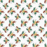 Beetle color pattern Royalty Free Stock Images