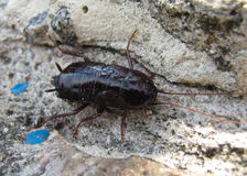 The beetle crawls on the rocks. The beetle crawls on business stock photography