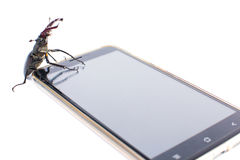 Beetle deer sits on a smartphone Royalty Free Stock Photo