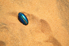 Beetle in the desert Stock Images