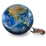 Beetle and the earth, including elements furnished by NASA. Royalty Free Stock Image